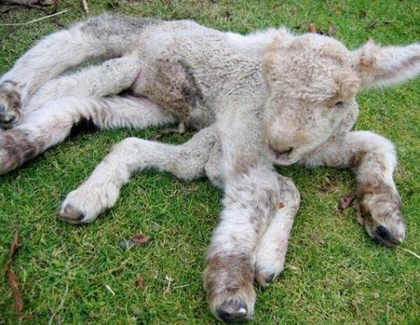 Животные с врожденными дефектами (20 фото)
