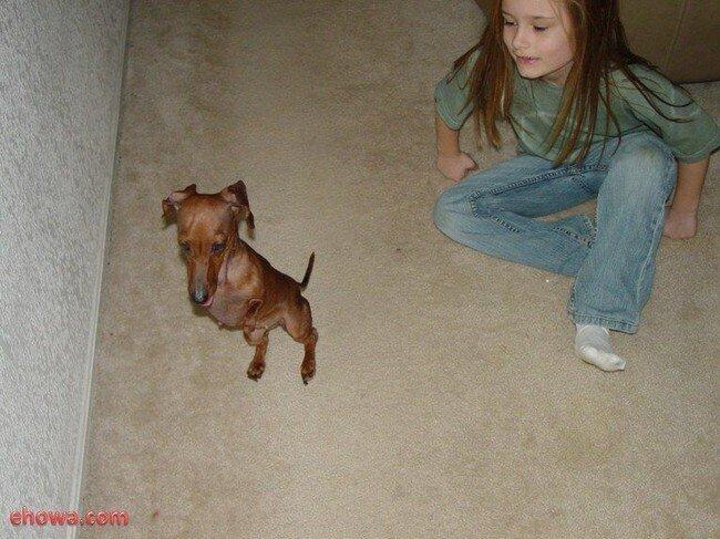 Пес без передних лап (12 фото)