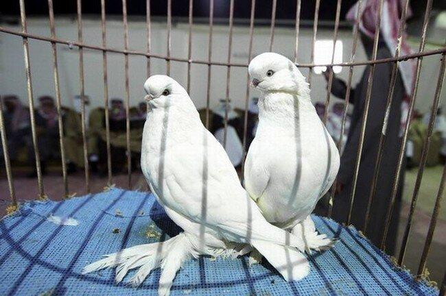 10 лет тюрьмы за голубей (2 фото)