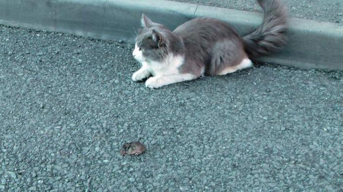Игра в кошки-мышки (9 фото)