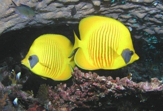 Красота подводного мира (14 фото)