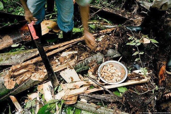 КВД - Курс Выживания в Джунглях (10 фото)