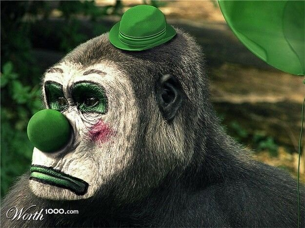 Животные-клоуны (43 фото)