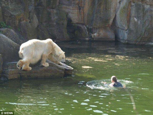 Упала в вольер к медведям (4 фото + видео)