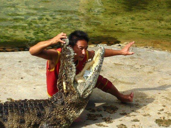 Укротители крокодилов (4 фото)