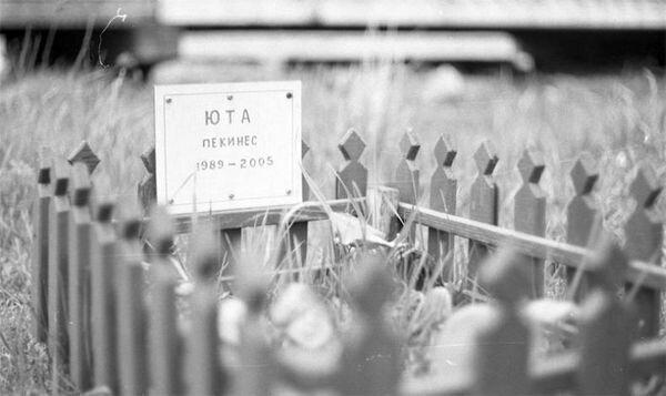 Кладбище домашних животных (7 фото)