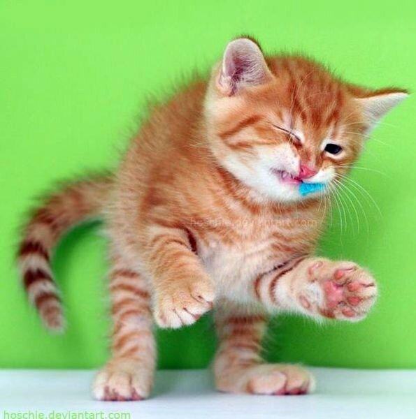 Котятки (20 фото)