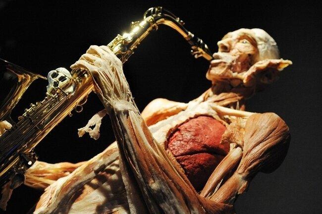 Выставка Body Worlds (10 фото)