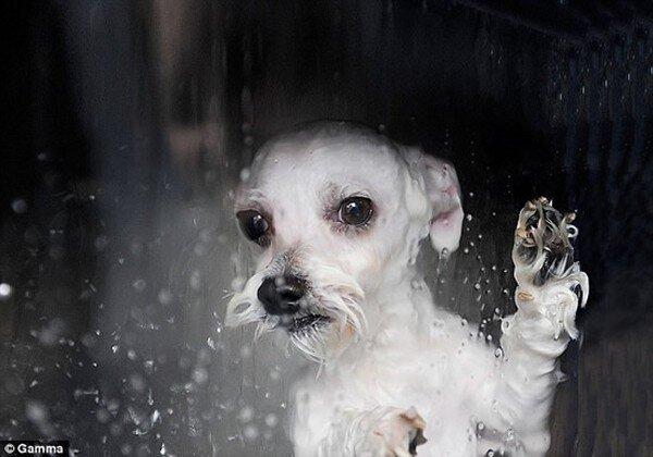 Моющая машинка для домашних животных (4 фото)