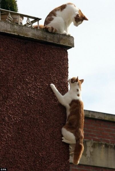 Спайдер-кот (5 фото)