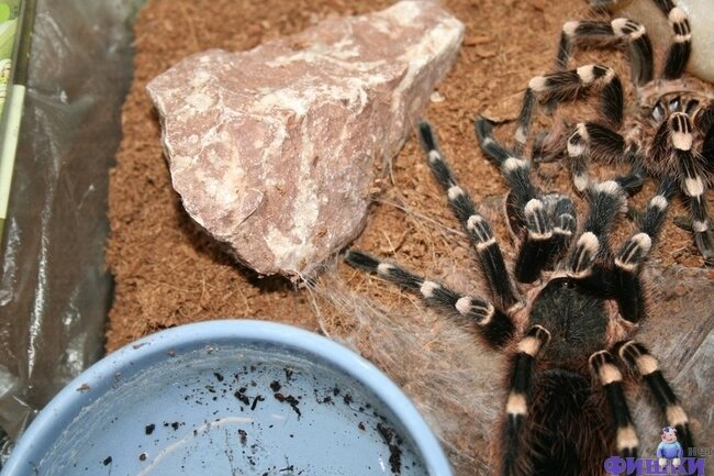 Линька паука (9 фото + видео)