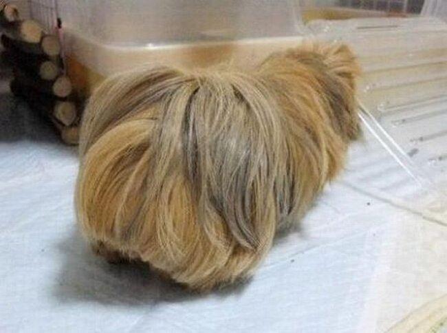 Неведомое волосатое (4 фото)