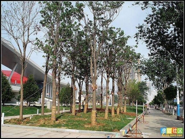 Как в Китае ухаживают за деревьями (14 фото)
