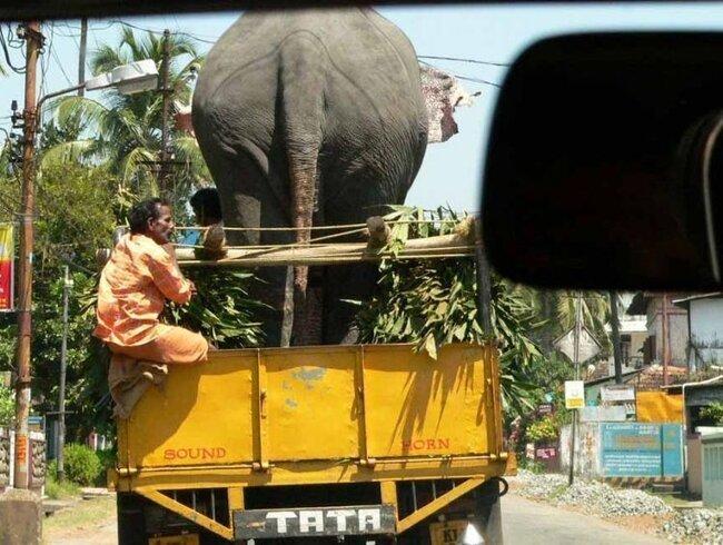 Из Индии с любовью (72 фото)