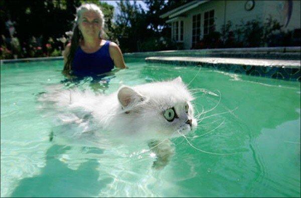 Мокрые кошки (17 фото)