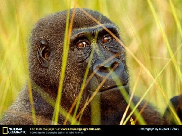Фотографии от National Geographic (103 фото)
