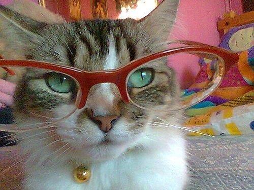 Котики в очках (5 фото)