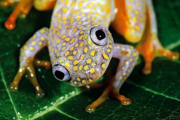 Лягушки (9 фото)