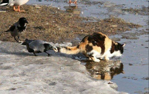 Лови момент! Про животных (40 фото)