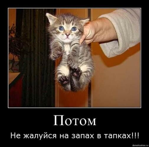 Кошачий позитив (21 фото)