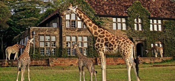 Жирафье поместье (4 фото)