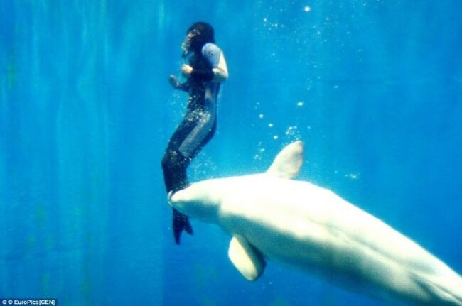 Как дельфин человеку жизнь спас (3 фото)