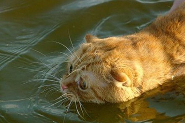 Испуганный кот (4 фото) (4 фото)