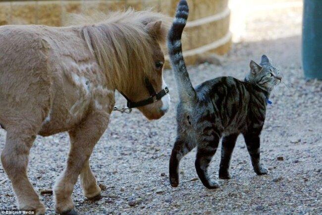 Лошадка-карлик (4 фото)