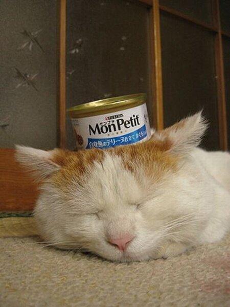 Кот, который любит поспать (3 фото)