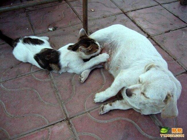 Кот в роле щенка (4 фото)