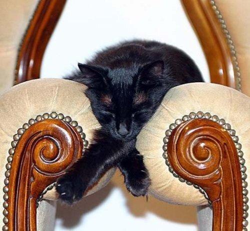 Спящие котята (19 фото)