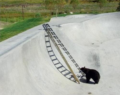 Медвежий побег (4 фото)