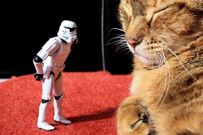 Star Troopers  в реальной жизни (54 фото)