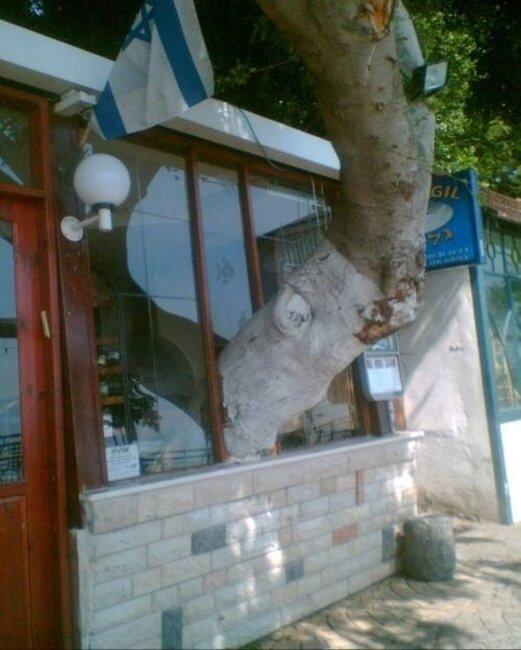 Сила деревьев (27 фото)