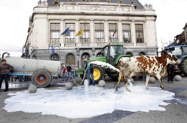 Молочная забастовка в Бельгии (6 фото)