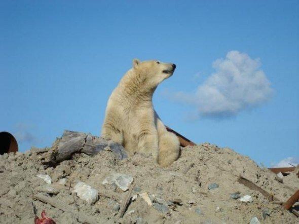 Медведь на стройке (17 фото)