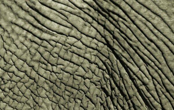 Природные узоры (10 фото)