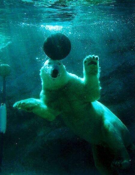 Игры белого медведя (17 фото)