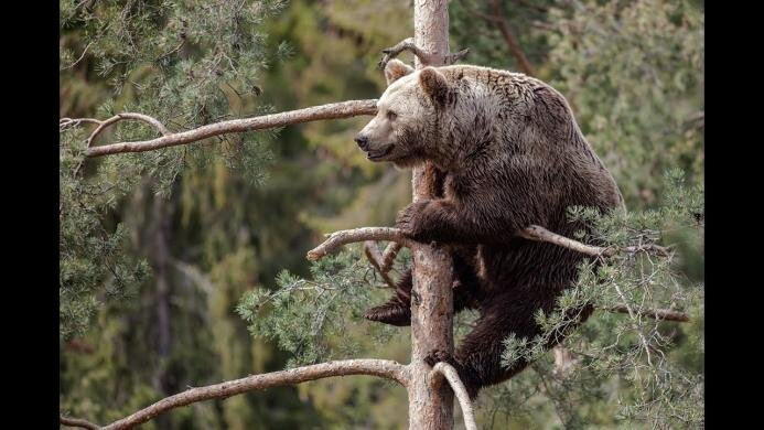 """Ибо нефиг! Мишка """"ОТБОМБИЛСЯ """" с дерева"""