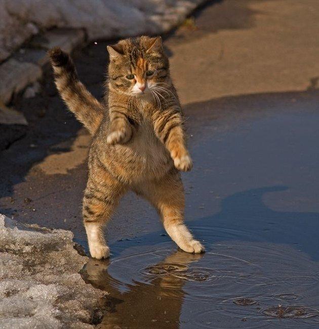 Забавный кот (8 фото)