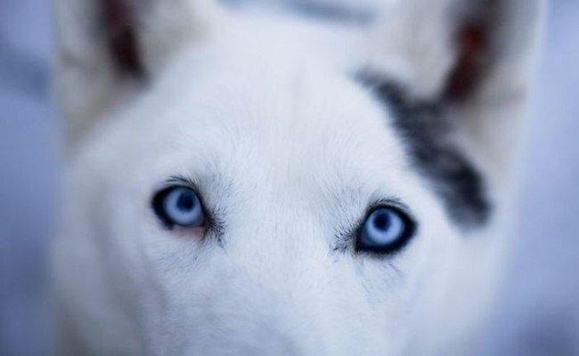 Собачья работа (20 фото)