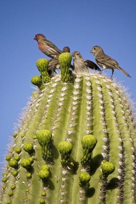 Птичка в кактусе (10 фото)