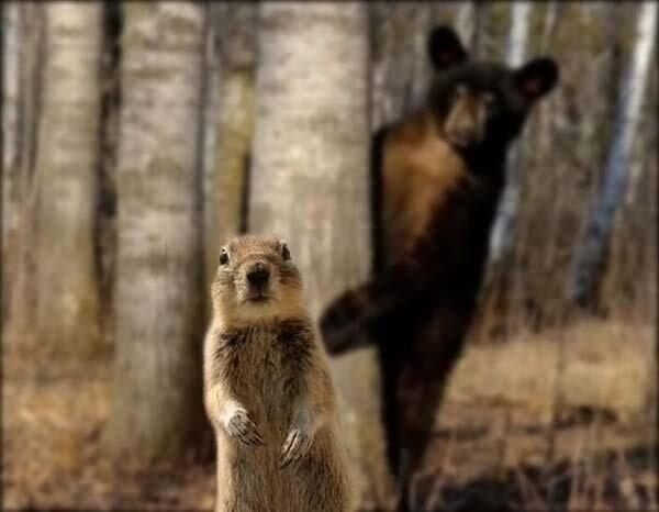 Фотожабы на медведя (9 фото)