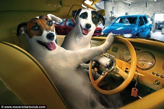 Собаки механики (11 фото)