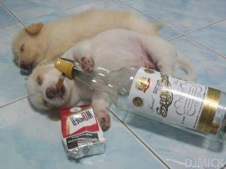 Напились как животные   (3 фото)