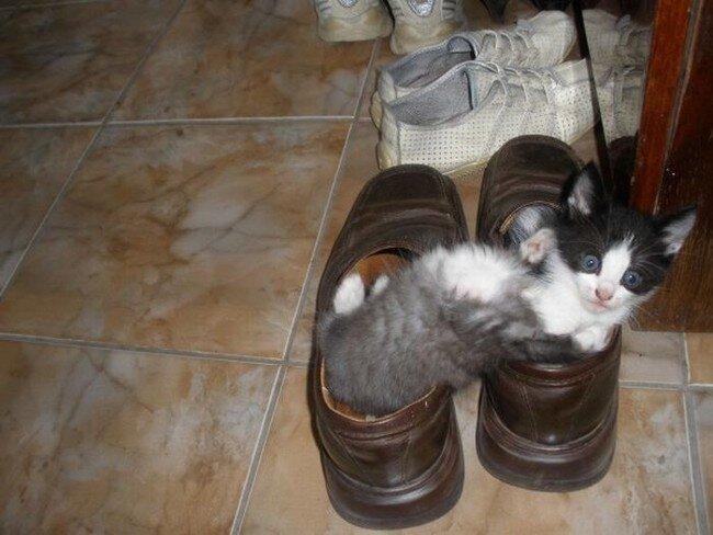 Котята в ботинках (8 фото)