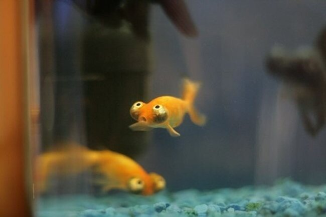 Самая забавная Рыба в Мире (3 фото)