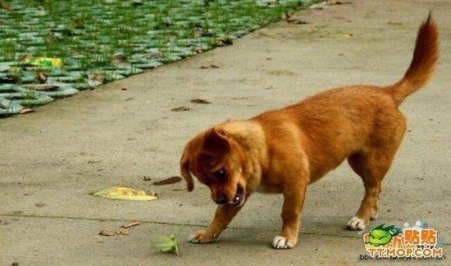 Собака борется с богомолом (4 фото)