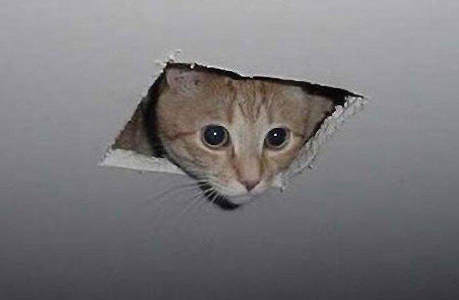 Кот в потолке (4 фото)