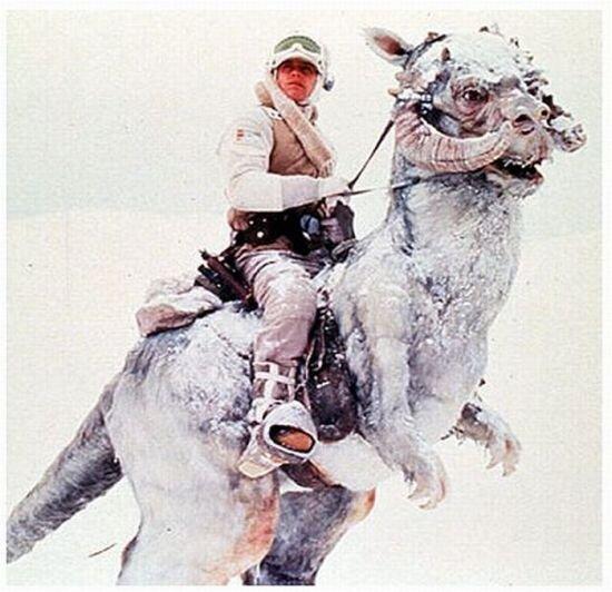 Люк Скайвокер верхом (30 фото)